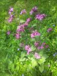 Fleurs dans le jarding des Camélias