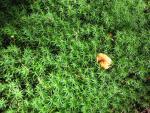Pilz inmitten von Moos