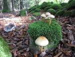 Pilzen