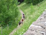 Het pad achter Les Camélias: de Chemin de Melchi Rose